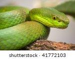 single colorful scrunch green... | Shutterstock . vector #41772103