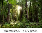 hiking trails through giant... | Shutterstock . vector #417742681