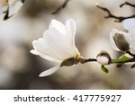 Spring Scenic With Blossoms Of...