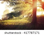 Sunny Landscape In The Forest...