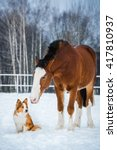 draft horse and red dog | Shutterstock . vector #417810937