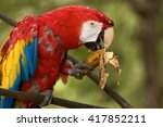 old red macaw parrot sitting on ... | Shutterstock . vector #417852211
