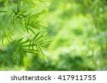 closeup nature view of green... | Shutterstock . vector #417911755