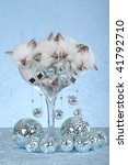 Stock photo  ragdoll kittens sleeping inside large champagne glass with many disco mirror balls 41792710