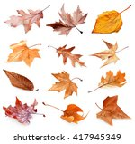 Collection Of Autumn Dried...