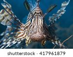 Close Up Of A Red Lionfish ...