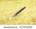 Lost Eagle Pen Feather On The...