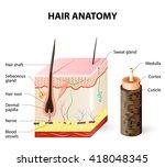 hair anatomy | Shutterstock . vector #418048345