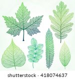 Vector Leaves Isolated And...