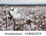 cotton fields ready for... | Shutterstock . vector #418082524