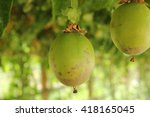 Passion Fruit Fresh From The...