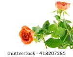 Beautiful Rose Isolated On...