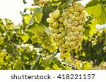 grape branch on the nature...   Shutterstock . vector #418221157
