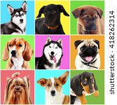 dogs and cats portraits on... | Shutterstock . vector #418262314