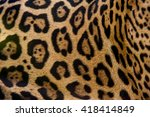 Beautiful Fur Pattern Of A...