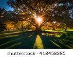 Burst Of Sun. Adelaide Botanic...