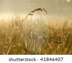 Cobweb In The Light Of The...
