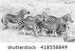 zebra running wildly over... | Shutterstock . vector #418558849