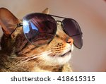 Stock photo cat wearing sun glasses happy and content on summer vacation 418615315