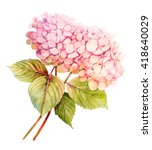Two Pink Hydrangeas Watercolor...