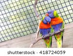 Two Colorful Romantic Lorikeet...