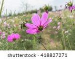 Pink Wildflowers Meadow...
