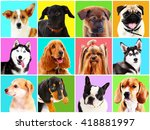 dogs portraits on bright... | Shutterstock . vector #418881997