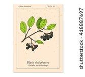 black chokeberry  aronia... | Shutterstock .eps vector #418887697