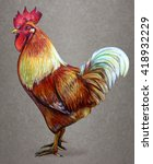 Rooster Drawing. Rooster On...