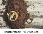 young sage plant in the shell... | Shutterstock . vector #418935325