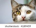 Stock photo kitten looking at camera 4189459