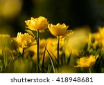 nature flower background.... | Shutterstock . vector #418948681