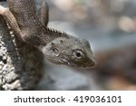 crested lizards crawling tree | Shutterstock . vector #419036101