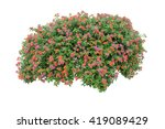 Flower Bush Isolated On White...