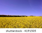 yellow summer field   czech... | Shutterstock . vector #4191505