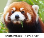 The Red Panda  Firefox Or...