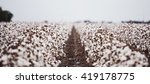 cotton fields ready for... | Shutterstock . vector #419178775