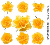 Set Of Fresh Yellow Roses...