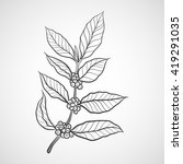 coffee plant with coffee leaf | Shutterstock .eps vector #419291035