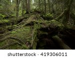 landscape of forest in deep... | Shutterstock . vector #419306011