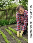 senior woman gardening | Shutterstock . vector #41934445