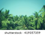 Coconut Palm Trees  Beautiful...
