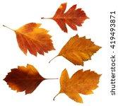 viburnum perspective   dry... | Shutterstock . vector #419493871