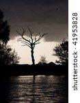 Dead Oak Tree Under A...