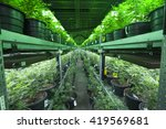 Industrial Marijuana Grow...