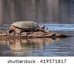 Common Snapping Turtle...