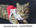 Stock photo cat wearing baby nursery 419670985