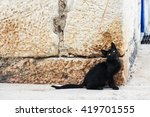 Black Stray Kitten Sitting In...
