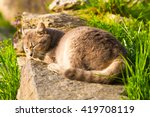 Cat Sleeping Peacefully In The...