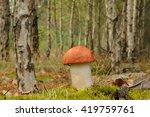 leccinum aurantiacum  commonly... | Shutterstock . vector #419759761